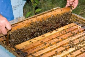 A Beginneru0027s Guide To Keeping Beehives In Your Backyard