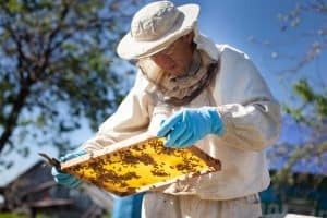 start beekeeping with our guide to the basics to becoming a beekeeper