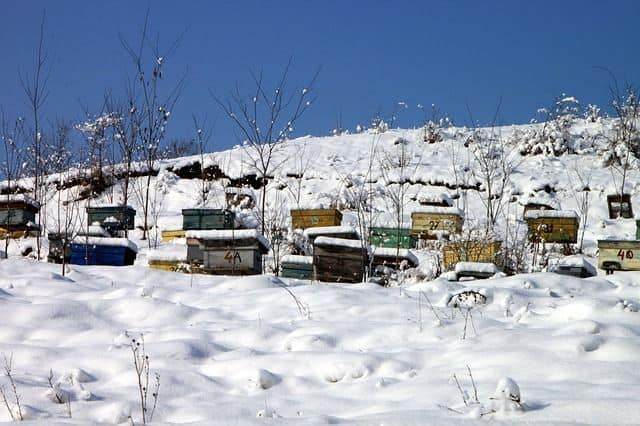 Beekeeping-in-Winter
