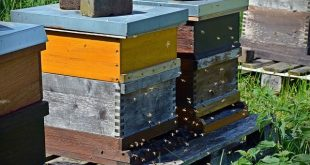 How to start a bee hive : A step by step guide