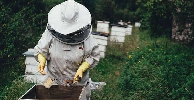 How to start a bee hive without buying bees