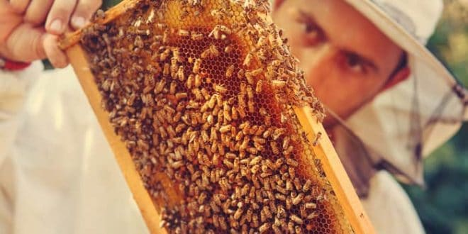 How To Raise Honey Bees | The Ultimate Guide