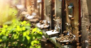 Raising Honey Bees | Benefits of Raising Honey Bees