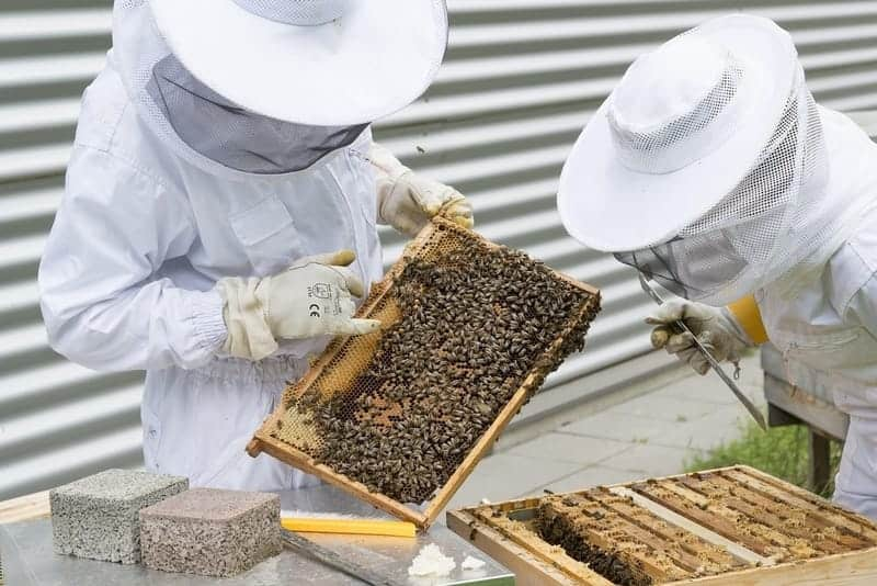 How to start a bee farm business