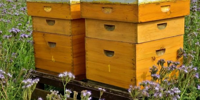 Top 14 Best Bee Boxes for Sale 2019 Review Buyers Guide EbeeHQ
