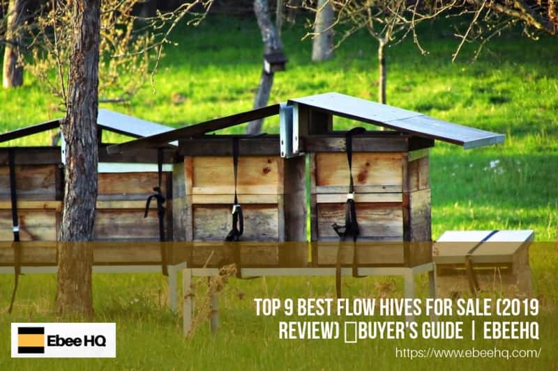 Top 9 Best Flow Hives For Sale (Review) 🥇Buyer's Guide | EbeeHQ